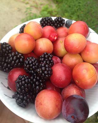 Frugt fra haven odense - ernæring fyn ernæring odense - ernæringsvejledning fyn - ernæringsvejledning odense