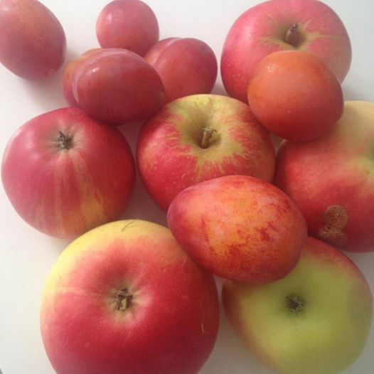 Frugt fra haven odense - vægtab fyn - vægttab odense - skønhed fyn - skønhed odense - hudpleje fyn - hudpleje odense